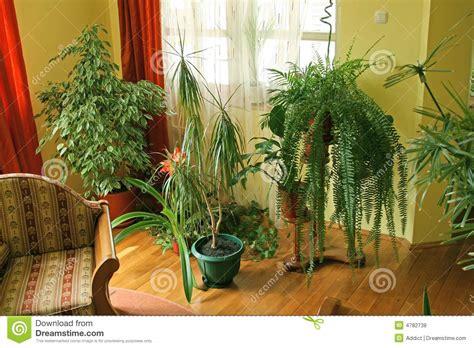Sala De Visitas Com Plantas Verdes Fotos de Stock Royalty ...