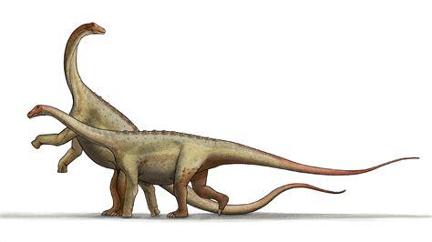 Saltasaurus   Wikipedia