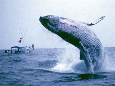 Salvemos a las ballenas   Solidaridad   Taringa!