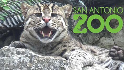 San Antonio Zoo Tour & Review with The Legend   YouTube