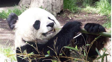 San Diego Zoo   Full Day Tour   YouTube