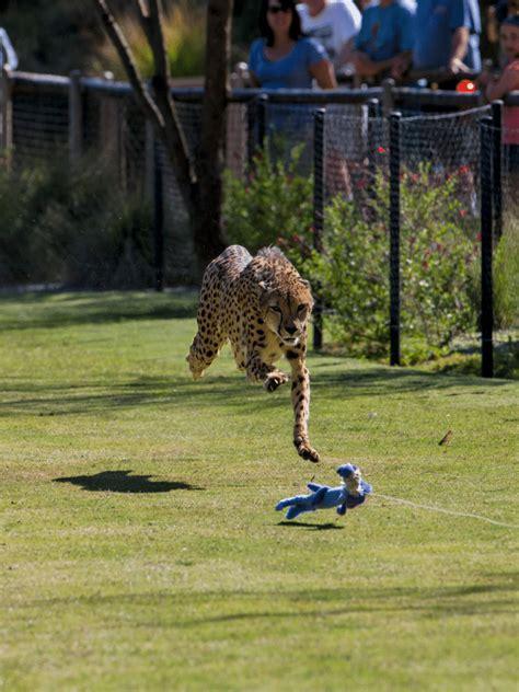 San Diego Zoo Safari Park Detailed Guide | San diego zoo ...