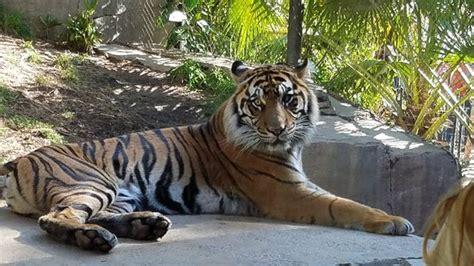 San Diego Zoo Safari Park  Escondido    2019 All You Need ...