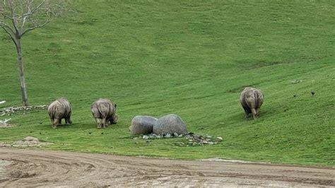 San Diego Zoo Safari Park  Escondido    2020 All You Need ...