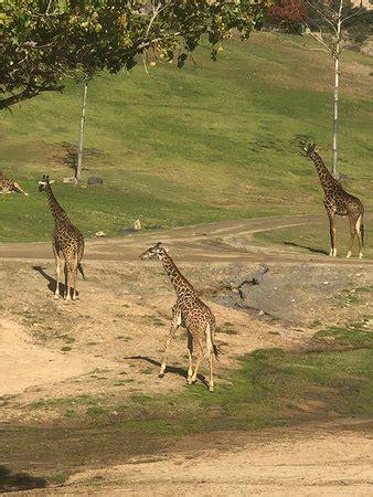 San Diego Zoo Safari Park  Escondido    All You Need to ...
