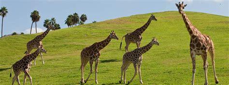 San Diego Zoo Safari Park Vacation Package