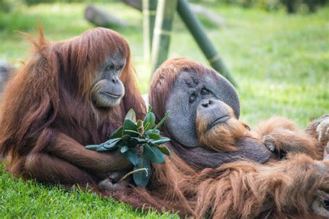 San Diego Zoo | San Diego Zoo Tickets | SanDiego.com
