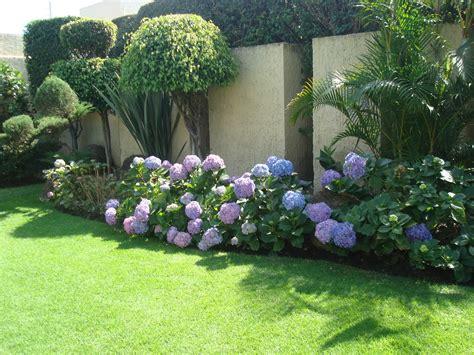 sancarlosfortin: flores hortensias azules y jardin en av ...