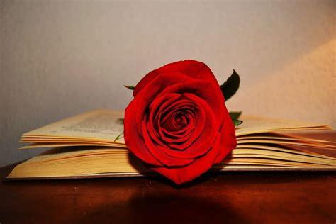 Sant Jordi en Palma: Una fiesta para leer