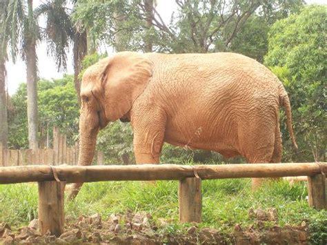 Sao Paulo Zoo  Brazil : Address, Phone Number, Nature ...
