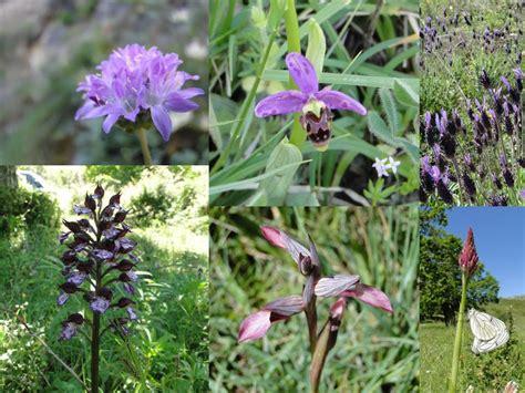 Saramaganta: Training Day: Flora mediterránea da Enciña da ...