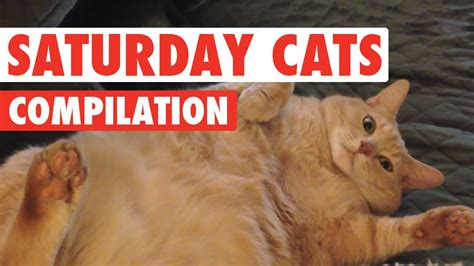 Saturday Cats Funny Pet Video Compilation 2016   YouTube