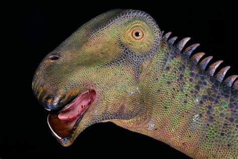 Sauropodes  Page 11  / Paléontologie / Jurassic Park.fr ...