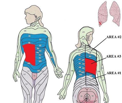 Science of Massage Institute » MEDICAL MASSAGE PROTOCOL ...