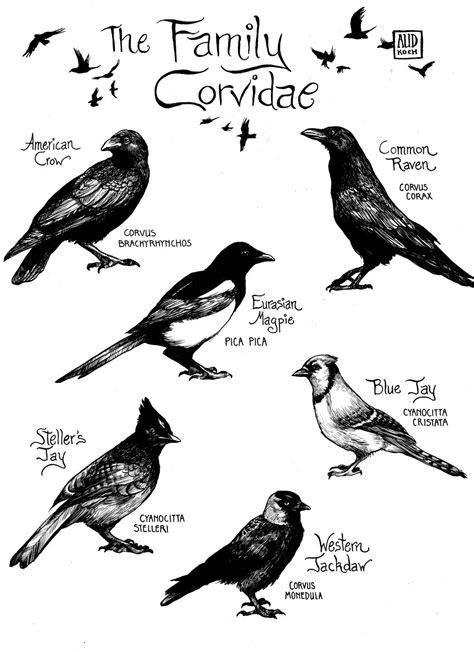 scientific illustration   Aud Koch