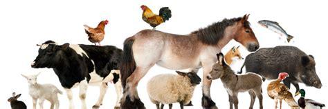 Scientific topic: Animal health   European Food Safety ...