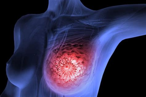 Scientists grow breasts in the lab to help develop new ...