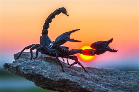 Scorpio Zodiac Sign: The Healer, Therapist, Investigator ...