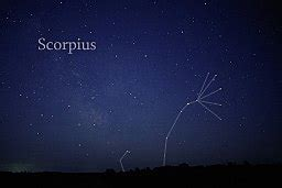 Scorpius   Wikipedia