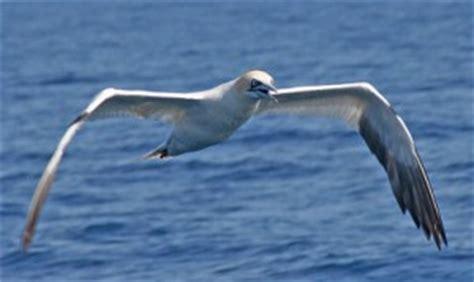 Se identifican 42 santuarios de aves marinas en territorio ...
