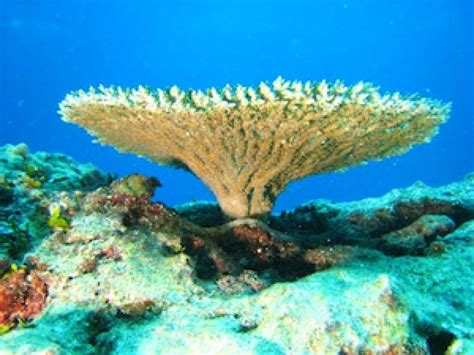 ¿Se notan las estaciones en el fondo del mar?