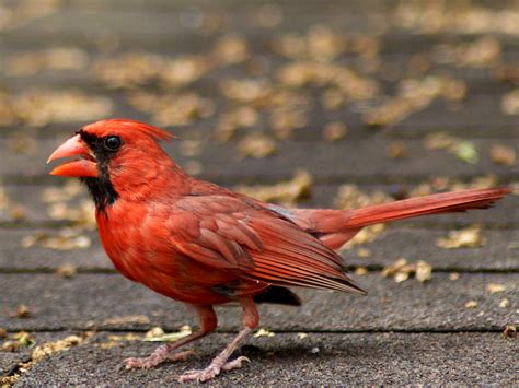 SE Texas Birding & Wildlife Watching: In Praise of Common ...