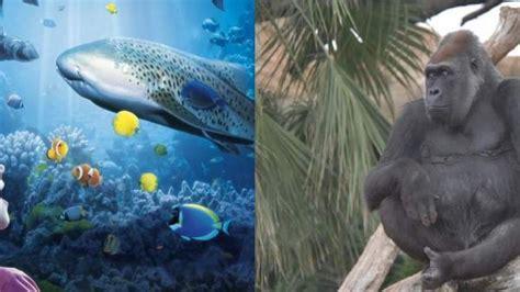 Sea Life y Bioparc proponen una clase práctica para ...