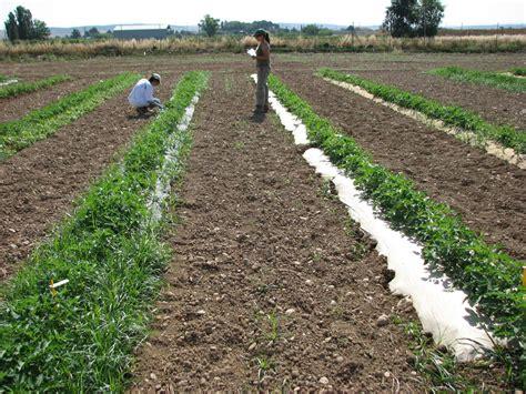 SEAE pide que la agricultura ecológica se impulse en 2016 ...