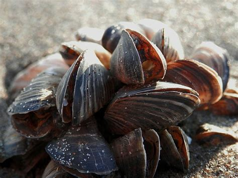 Seashell   Formation, Type and Quiz | Biology Dictionary