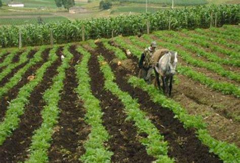 Sector agropecuario de Sucre recibirá asistencia técnica ...