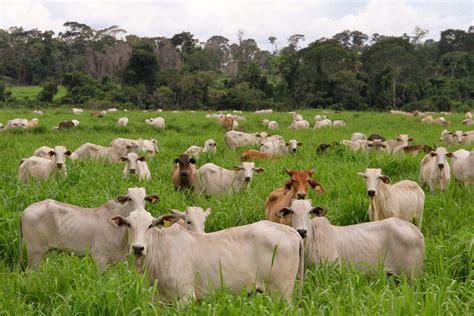Sector ganadero de Nicaragua reporta un crecimiento de 3% ...
