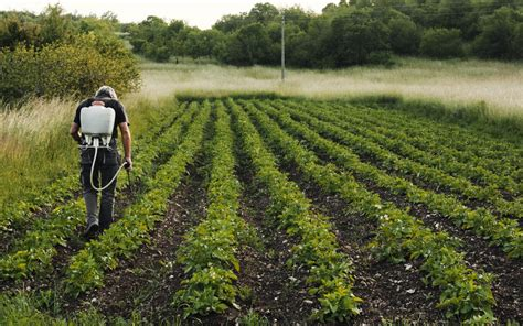 sector_primario_agricola