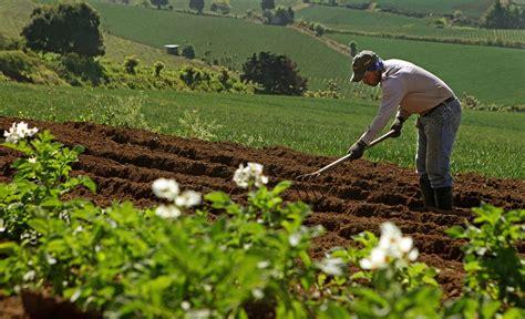 Sector primario del país, impactado por Ley Agrícola de ...