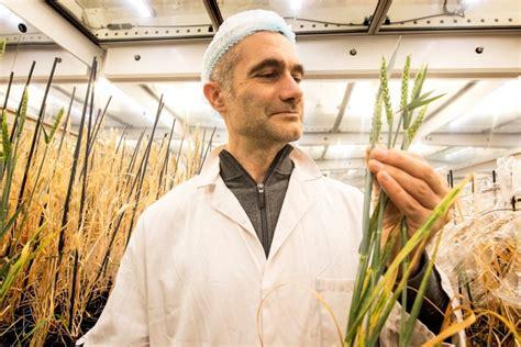Segunda Revolución Verde: Científicos logran acelerar el ...