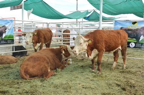 Seguridad y riesgo; ganadería en México   El Vigía