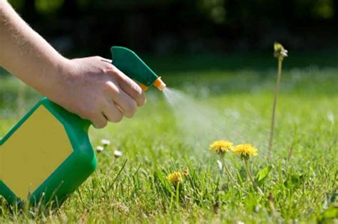 Selective Grass Herbicide | Lawn Green