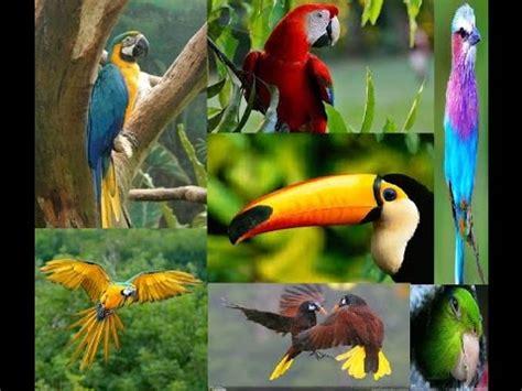 Selva tropical : Flora y Fauna Jungla   Documental ...
