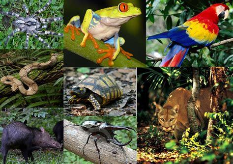 Selva Tropical Perennifolia: marzo 2014