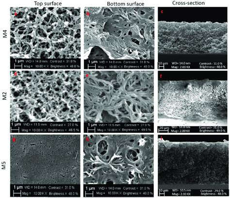 SEM images: top surface and bottom surface of membranes M4 ...