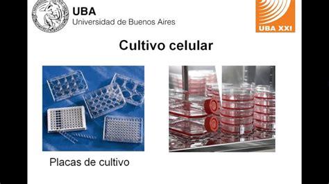 Seminario 5   Biología e Introducción a la Biología ...