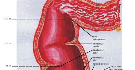 semiología quirurgica