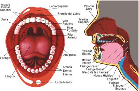 Semiología Quirúrgica: octubre 2011