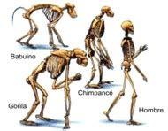 señala las pruebas científicas de que hubo una evolución ...
