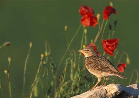 SEO/BirdLife busca la colaboración ciudadana para conocer ...