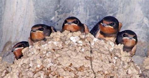 SEO/BirdLife denuncia 36 casos de destrucción de nidos de ...