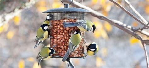 SEO/BirdLife lanza un concurso para animar a los ...