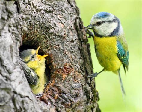 SEO/BirdLife on  con imágenes  | Pájaros bonitos, Imágenes ...