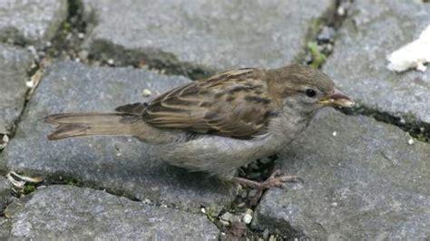 SEO/BirdLife pone en marcha un programa de seguimiento ...