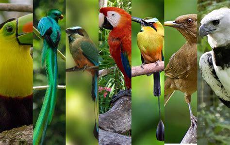 ¿Será de Honduras el ave más bella de Centroamérica ...