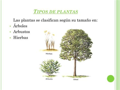 SERES VIVOS LAS PLANTAS.   ppt video online descargar